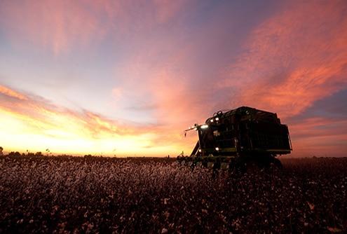 Repuestos para cosechadoras de algodón